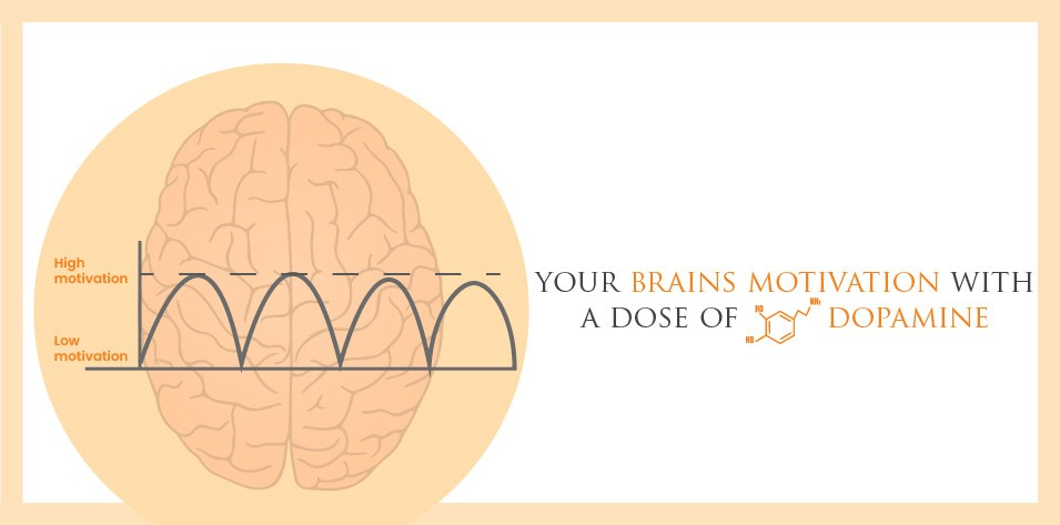 Your Brain's Motivation with a Dose of Dopamine