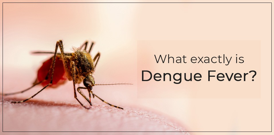What exactly is Dengue Fever?